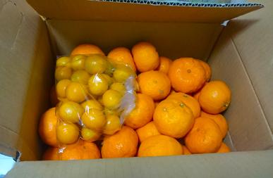 orangepinpon.jpg