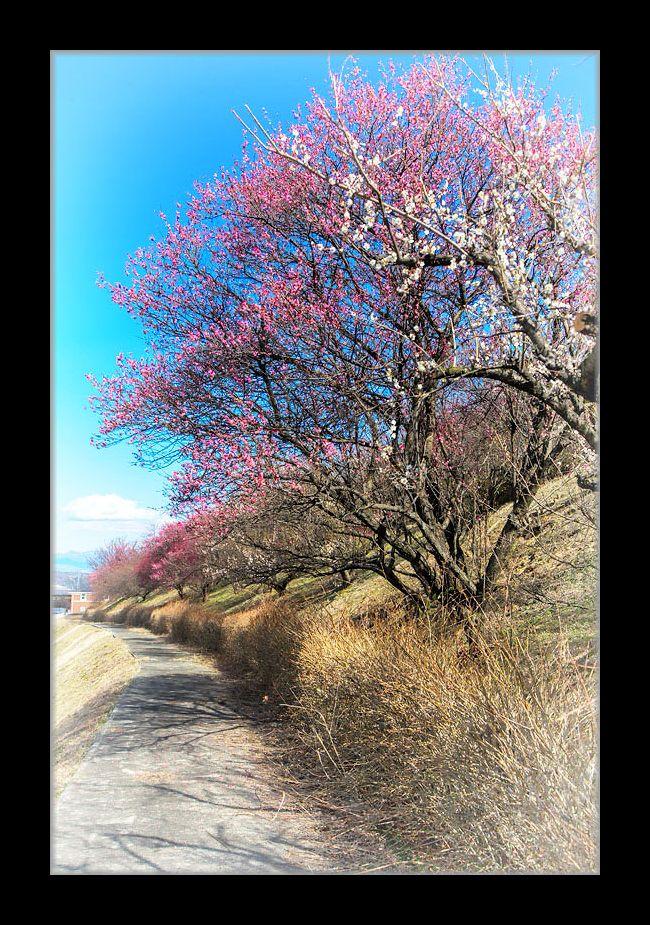 梅のある小路