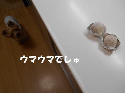 DSCN8497.jpg