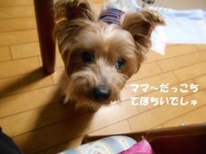 DSCN8942.jpg