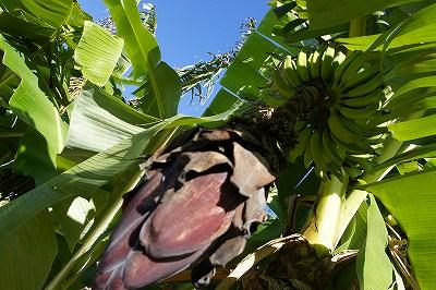 バナナとお花