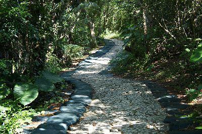 山道の坂道