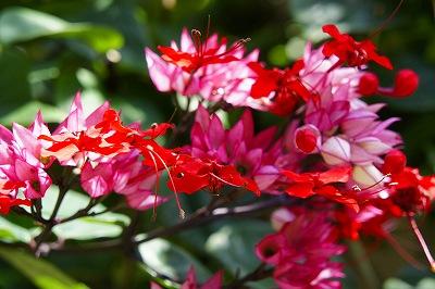 キレイナお花2