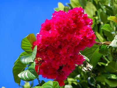 ピンクちゃんな お花