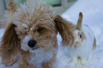 雪遊び20162月6