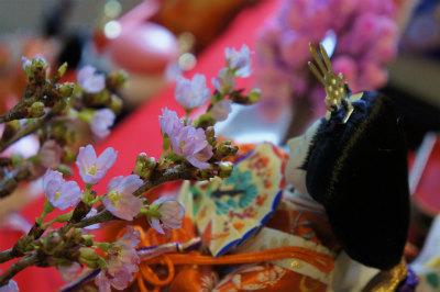 2016桜とおひなさま