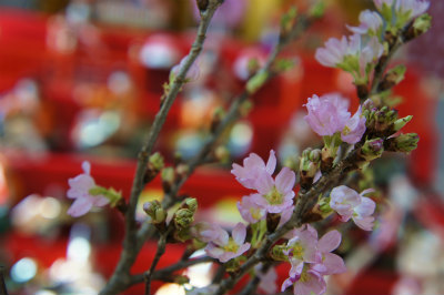 2016桜とおひなさま2
