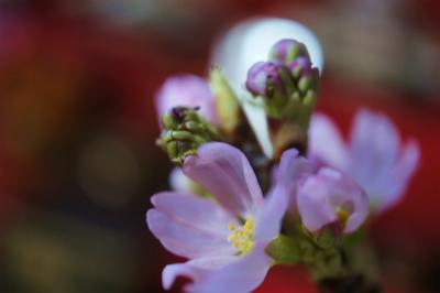 2016東海桜