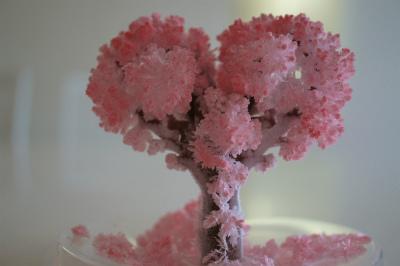 ハートのMAGIC桜