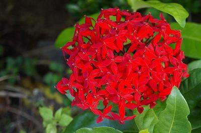 赤いキレイなお花