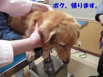 マックス27年ワクチン接種4
