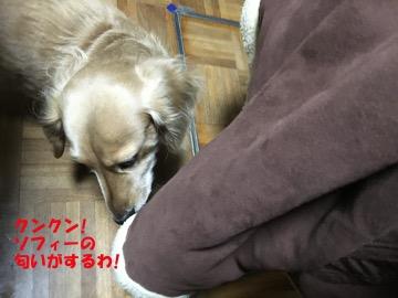 蒲生神社へ初詣7