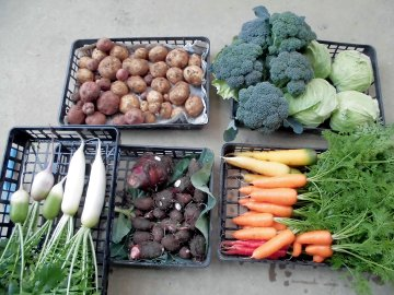 野菜を送る正月