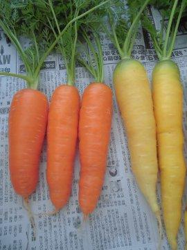 野菜を送る正月2