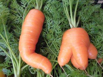 野菜を送る正月3
