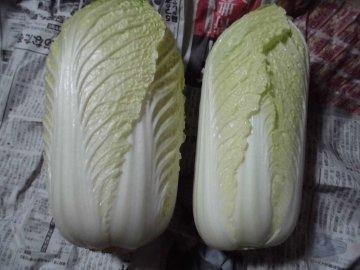 白菜剥いたら