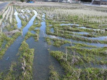 水浸しの2月の田んぼ