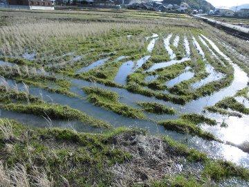 水浸しの2月の田んぼ2