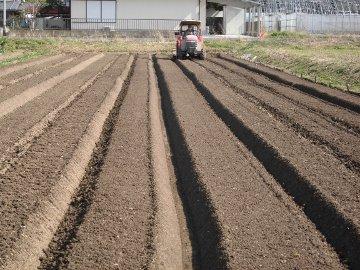 農園、直前4
