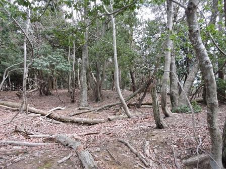 10駈倉山砦跡内部平坦面