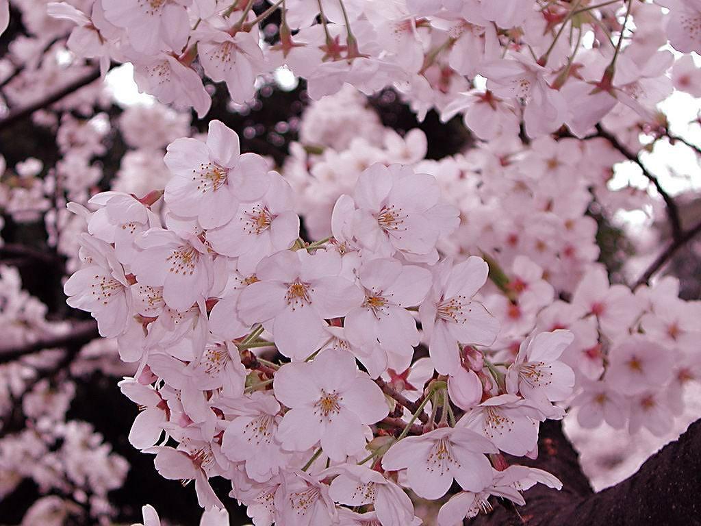 Flower1-012.jpg