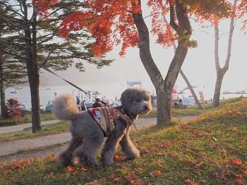 日光20151024-10