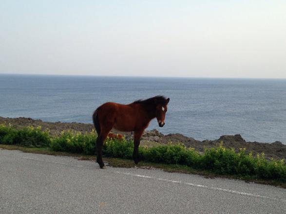 与那国馬2