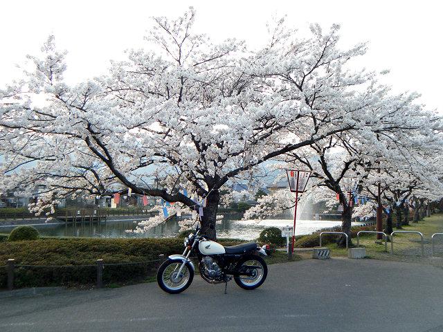 20100419-sakura-00.jpg
