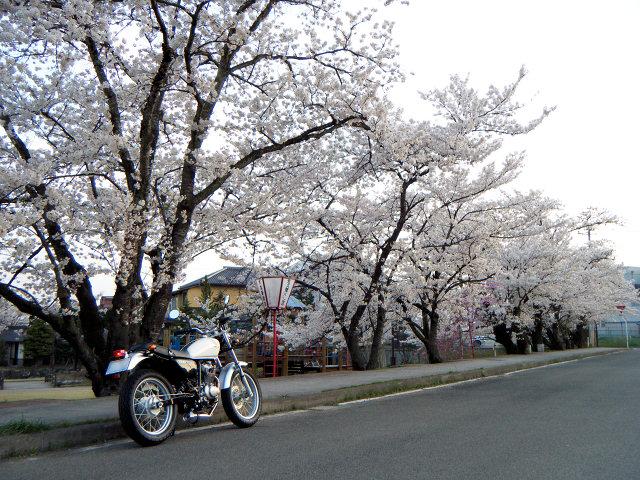 20100419-sakura-03.jpg