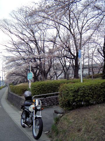 20110416-02.jpg