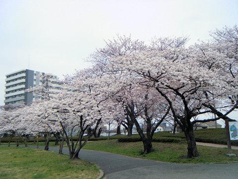 20110416-04.jpg