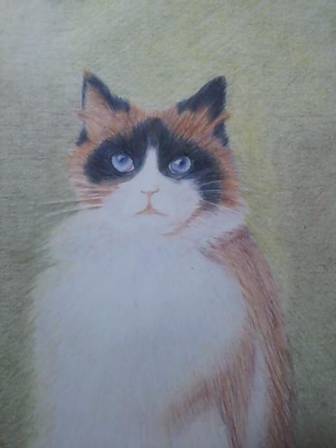 初めての猫2