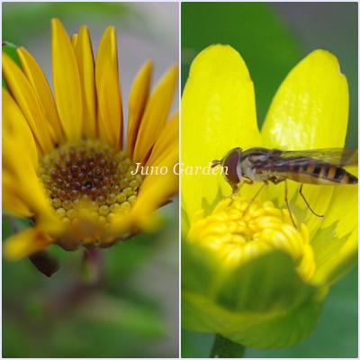 黄色の花160228