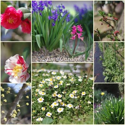 田舎の花160322