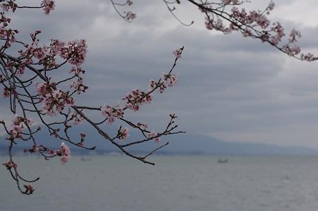 桜160402