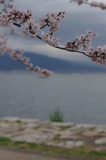 2桜160402