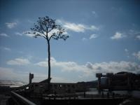 東日本大震災から5年・陸前高田市2016-02-28-123