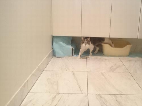 マミ竜トイレ