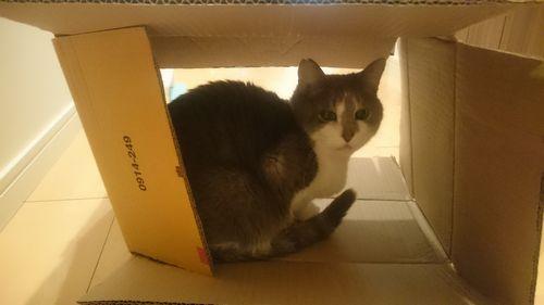 箱マミ竜2