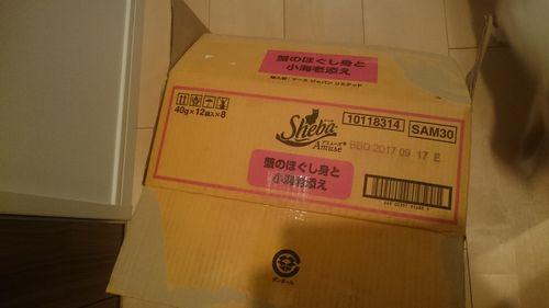 箱マミ竜1