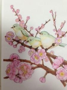 鶯塗り絵JPG