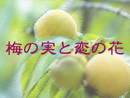 梅の実と恋の花