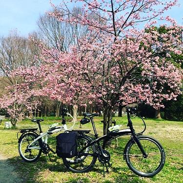 見沼自然公園河津桜