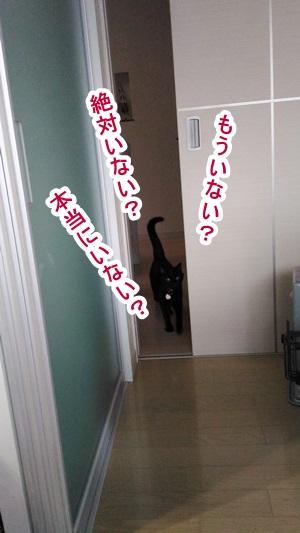 P_20160221_154448.jpg