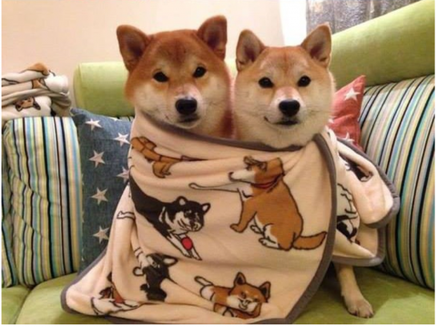 doge11.png