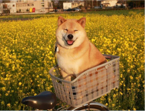 doge12.png