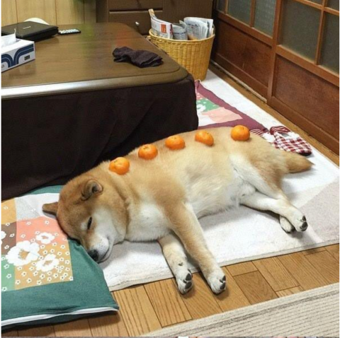doge1.png