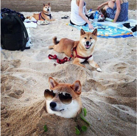 doge2.png