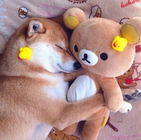 doge5.png