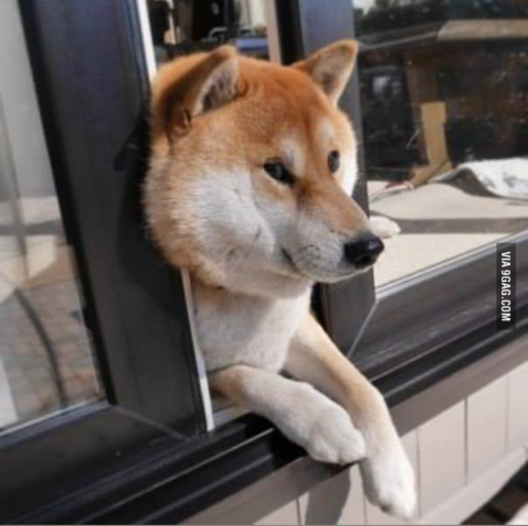 doge6.png